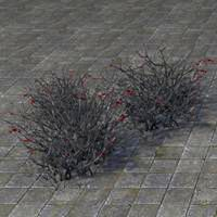 bushes_withered_cluster