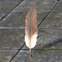 common_quill_feather