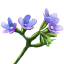 crafting_flower_vipers_bugloss_r1.png
