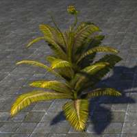 fern_plant_healthy_green