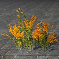 flowers_healthy_goldenrod