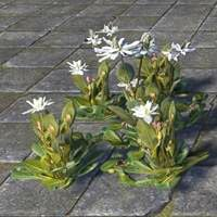 flowers_lizard_tail_cluster