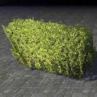 hedge_dense_low_wall