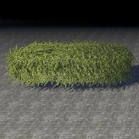 hedge_overgrown_long