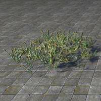 plants_glasswort_patch