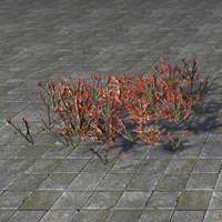 plants_ruby_glasswort_patch