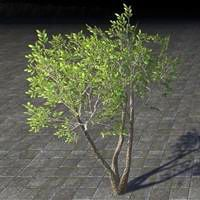 sapling_growing_shade