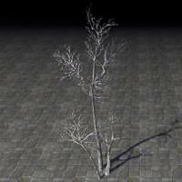 sapling_withered_thicket