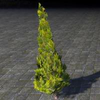 topiary_pruned_cypress