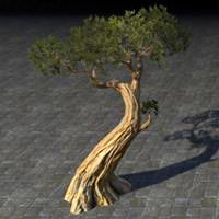 tree_hardened_juniper