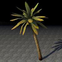 tree_leaning_palm