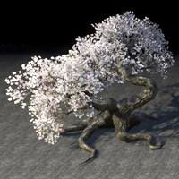 tree_tiered_white_cherry