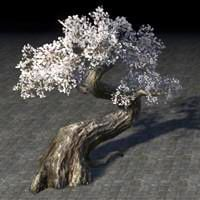 tree_twisted_white_cherry