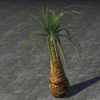 tree_water_palm